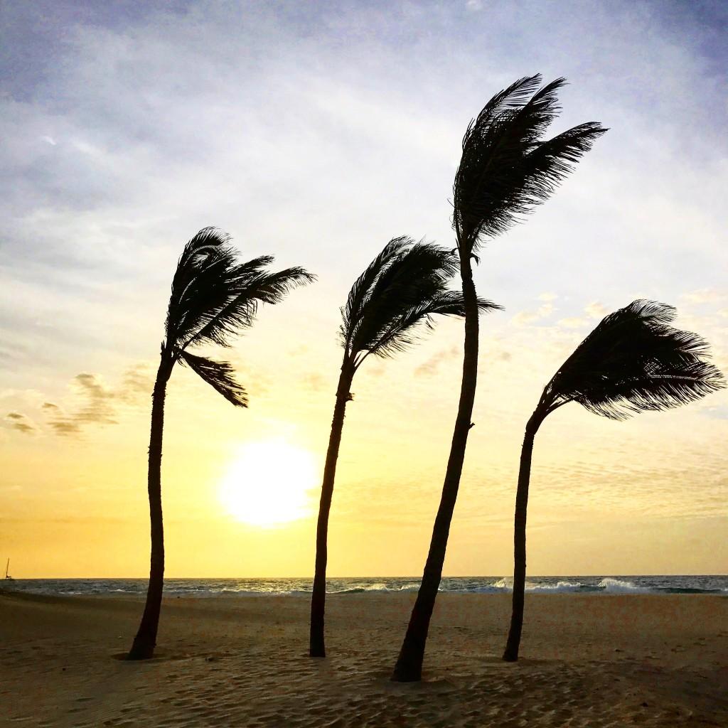 Roberto De Rosa sull'Isola di Sal con Cabo Verde Time - le palme al vento